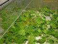 Desinfección vegetales
